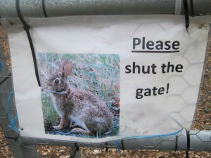 All you can eat buffet for rabbits on the other side of the gate.