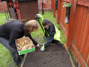 planting tatties