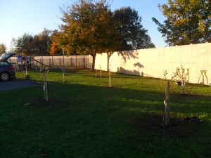 The apple trees are in place!