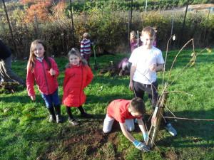 tree planting (14)