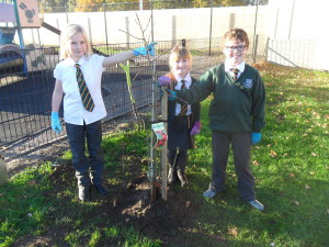 tree planting (20)