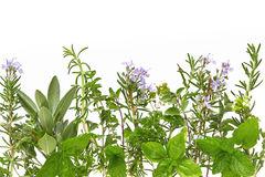 herb-border-4385393