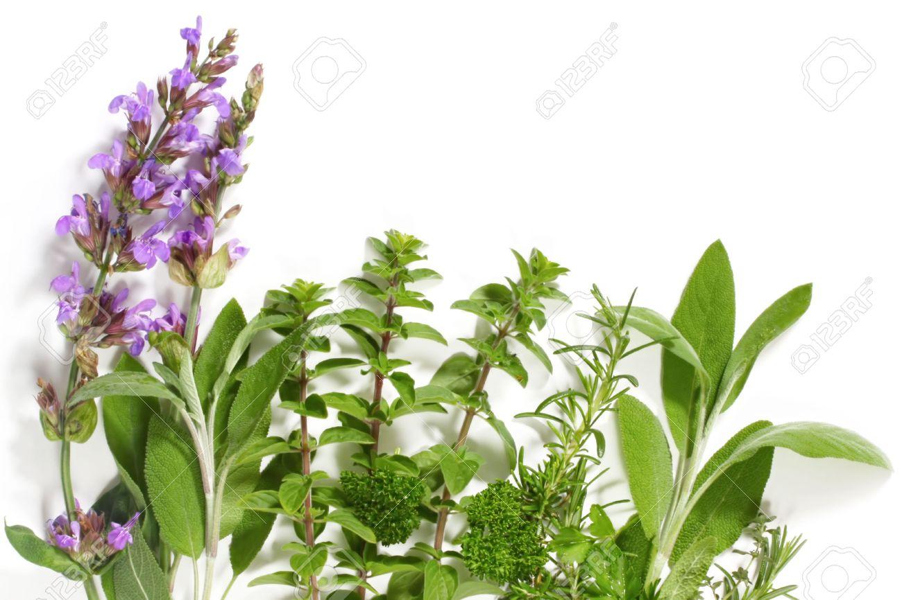 Herbs in the High Street