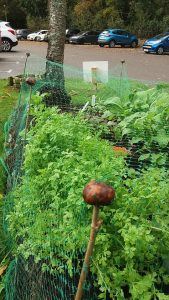 Maryhill Community Gardening Sessions @ Maryhill Medical Practice, Elgin | Scotland | United Kingdom